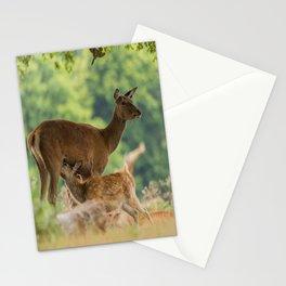 Spring Dear Stationery Cards