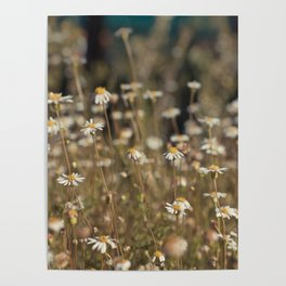 Field of Daisies - Floral Photography #Society6 Poster