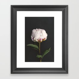 Peony - simply perfect Framed Art Print