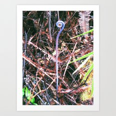 Tree Fern Curl Art Print