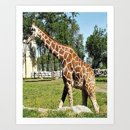 Day at the Zoo Art Print