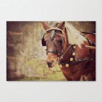 pony Canvas Prints featuring Pony by KimberosePhotography