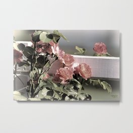 Pink Roses on Fence Rail Metal Print