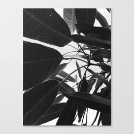 Natural Background 14 Canvas Print
