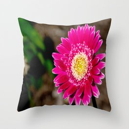 Garvinea Sweet Fiesta Gerber Daisy Throw Pillow