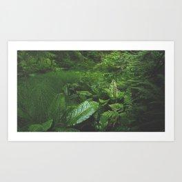 Old Growth Ferns Art Print