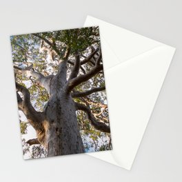 Scribbly Gum Tree Stationery Cards