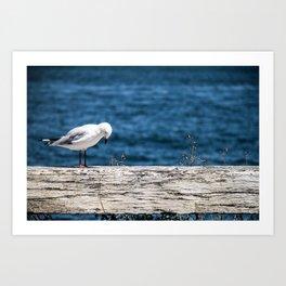 The Thinking Seagull Art Print