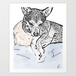 Boomer Art Print