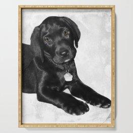 Black labrador puppy dog Serving Tray