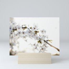 Cherry Tree Blossoms Mini Art Print