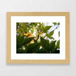 Macro Leaves Framed Art Print