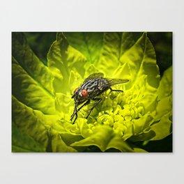 Macro Shot of a Summer Fly Sunbathing on a Yellow Perennial Garden Plant Canvas Print