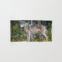 Wolf encounter in Jasper National Park Hand & Bath Towel