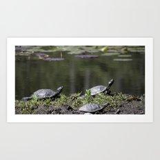 Family of Turtles Art Print
