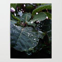 Greenery and leaf III Poster