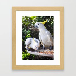 A Cocky Greeting Framed Art Print
