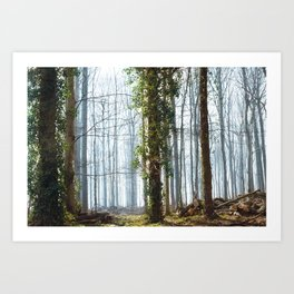 Forest (I) Art Print