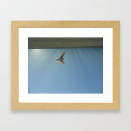 sunlight wings Framed Art Print