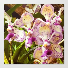Tropical Island Romantic Orchids With Pink & Yellow Accents Canvas Print