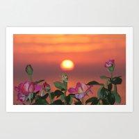 Sunset Cliffs Rosey Sunset Art Print