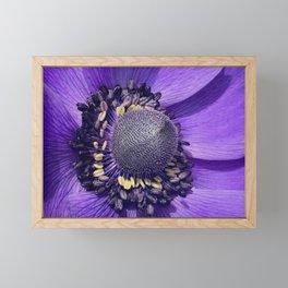 Anemone Purple Love Framed Mini Art Print