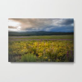 New Mexico Spring flowers Metal Print