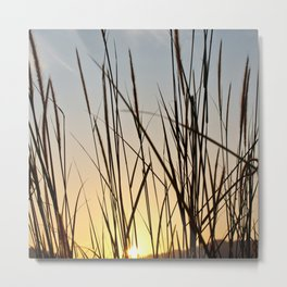 Wonderful sunset with teasel Metal Print