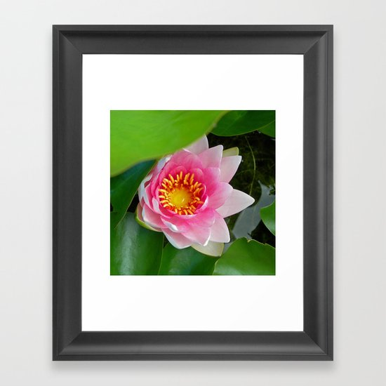 water lily IV Framed Art Print