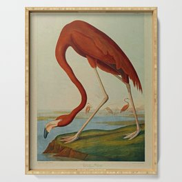 American Flamingo by John Audubon (1785 – 1851) Reproduction. Serving Tray