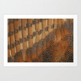 owl barn owl feather detail feathers veren kerkuil  Art Print