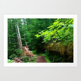 A path to an adventure Art Print