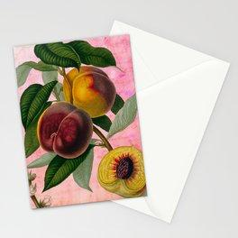 Vintage Botanical Collage, Bradford Peach Stationery Cards