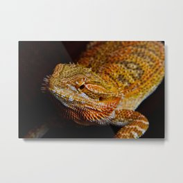 Bearded Dragon 2 Metal Print