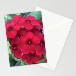 Red Summer Phlox Stationery Cards