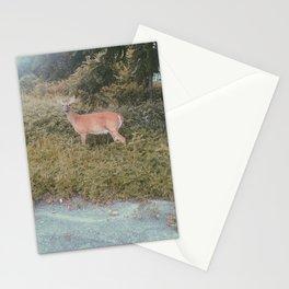 Parking Lot Deer Stationery Cards