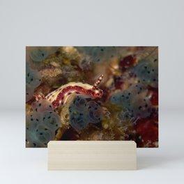 Hypselodoris maculosa Mini Art Print
