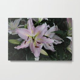 We always come back to the lily Metal Print