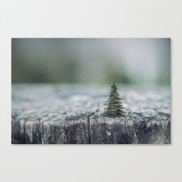 Tree by tree Canvas Print