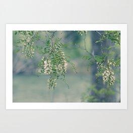 White Spring Blossoms Art Print
