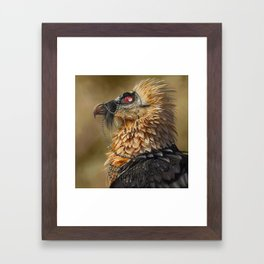 Necrophagy: Bearded Vulture Framed Art Print