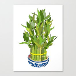 Lucky Bamboo in Porcelain Bowl Canvas Print
