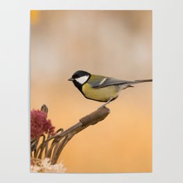 Songbird (Great Tit) on Autumn Day #decor #society6 #buyart Poster