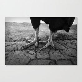 Condors Don't Wear Shoes Canvas Print