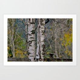 Behind trees Art Print