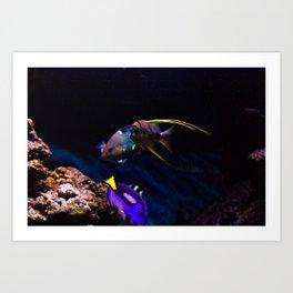 Fish #1 Art Print
