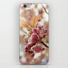 little buds iPhone & iPod Skin