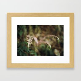 Pink Bracken Framed Art Print