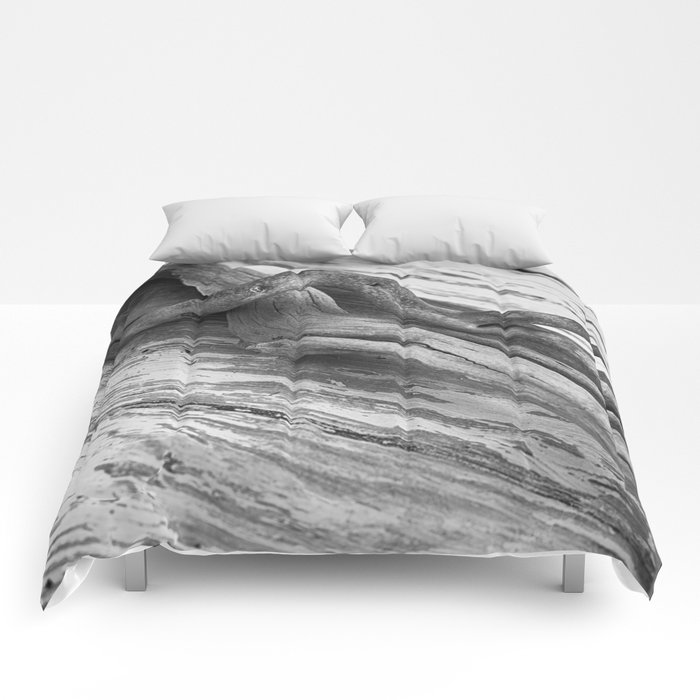 weathered driftwood black and white Comforters