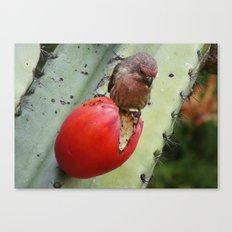 Cactus Fruit Canvas Print